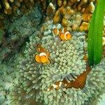 Peces payaso en el arrecife de la isla