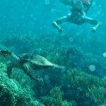 Buceando en el arrecife de la isla