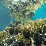 Blueforce Diving Nuweiba