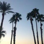 Palms surrounding property