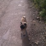 Pogo accompanying us for our morning walk