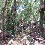 Wildlife Reserve Forest