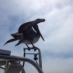 this is a great bit if wildlife viewing as this pelican landed on the boat and sailed with us fo