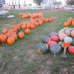 Pumpkin Patch across the street.