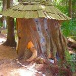 The stump house, built from an old growth cedar stump.