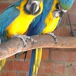 2 beautiful birds