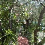En jättefin trädgård med olivträd, fikon m.m.