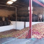 Local apples ready to be made into cider