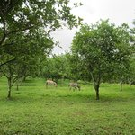 Donkeys in the orchard out front of the jodge as you drive in.