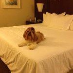 Na cama do hotel aproveitando a estadia.