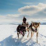 Photo de Holmen Husky - Dog Sledding Tours