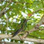 Veel verschillende kolibries in de tuin