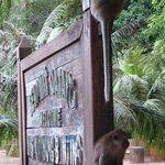 Greet by monkeys