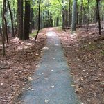 the wonderful trails