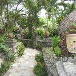 Tropical pathways