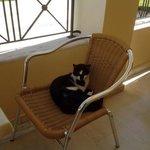 Resident cat (Kawala)