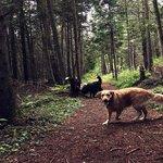 Groomed Hiking Trails