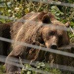 liberty bear 4
