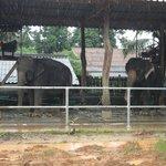 elefantes al lado del hotel