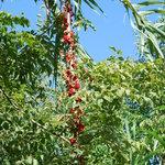 La flora del luogo è molto particolare, questa l'ho trovata passeggiando lungo il fiume.