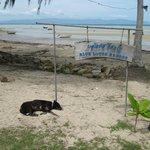 Beachfront + friendly dog