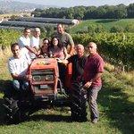 Montioni's grapes Harvest