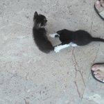 hotel kittens