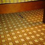 Pen under chair