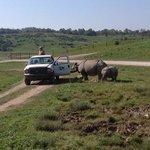 feeding the rhinos