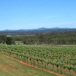 Lovely views of hillside and vines