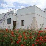 Photo of Luci di Puglia