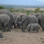 an elephant herd spotted in the Mara