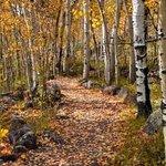 Beautiful fall colors on the Fish Lake Trail