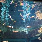aquarium de saint gilles