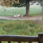 vue de la terrasse le matin