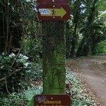 Trail の入口