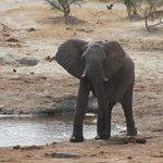 Ellie at waterhole