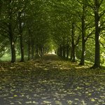 Tree lined avenue, Castleward Grounds