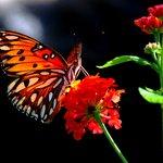 Butterfly enjoying the Lake Lure Flowering Bridge in Lake Lure, NC