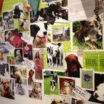 The Dog Wall