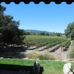 Vineyards at Hill Wine Company