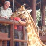 Giraffe Shelter