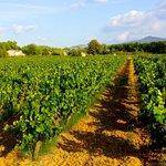 The surrounding vineyard