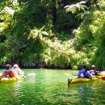 Sea kayaking Queen Charlotte Sound