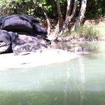 Guluyambi River Cruise