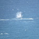Whales Frolicking in front of Wave Apartments