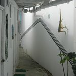 pozada lizard house