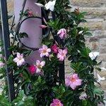 A little peek of flowers in the courtyard