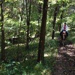 Riding through the woods at Jordan Hollow