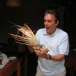 Lobster anybody